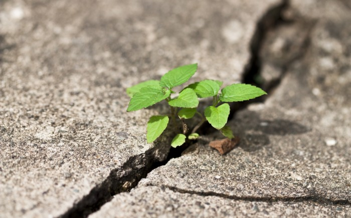 Resilience Through Your Career Journey