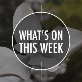 What's On 15 – 19 June